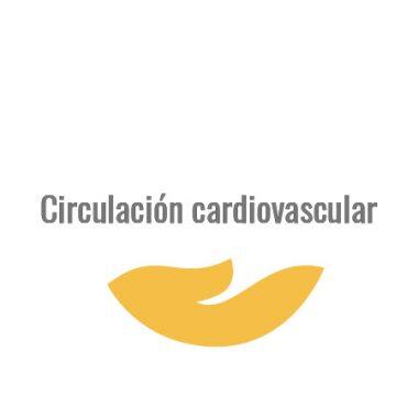 Circulación cardiovascular