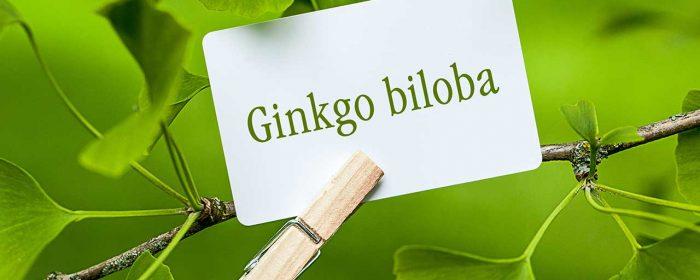 Propiedades del Ginkgo Biloba